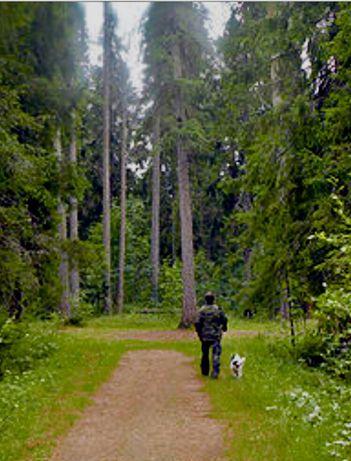 Приватизированный участок в лесничестве, 0,6га. Тихое село Красиловка