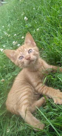 Oddam rudą kotkę