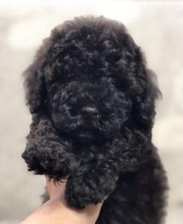 Мальчик . 2 месяца