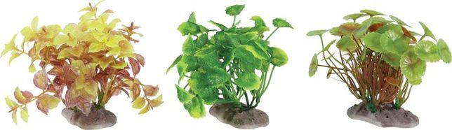 ZOLUX Display roślin S 6 szt. - zestaw B