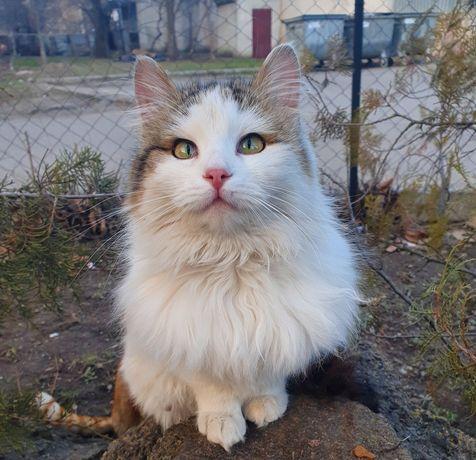 Кошечка милая пушистая