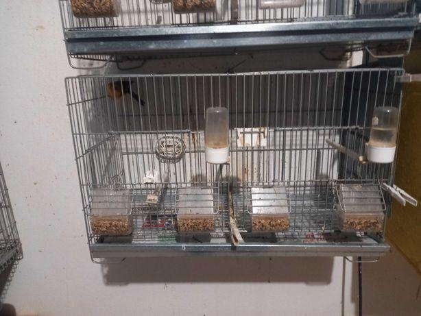 Vendo gaiolas para criação   de canarios
