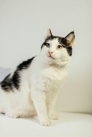 Котик Боря 6 лет ищет дом. Котики, котята, кошечка, котенок, кот