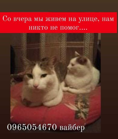 Никто не помог, котики на улице, дома больше нет
