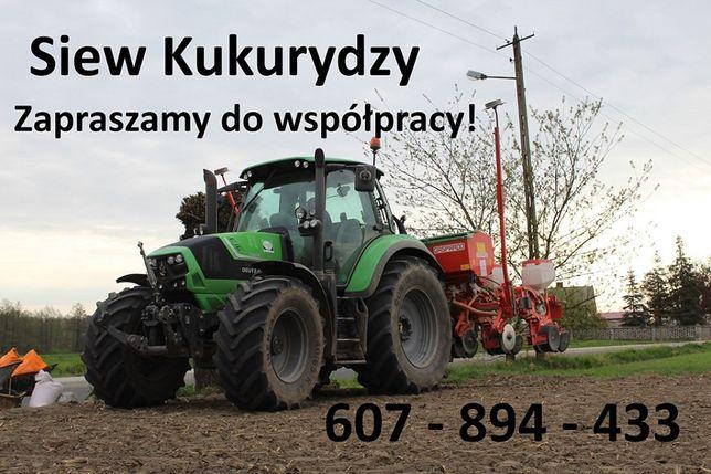 Siew kukurydzy...