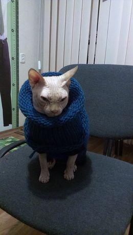 Канадский Сфинкс-вязка. Класс WCF (CAGCIB).(SPH d 09).Клубный кот.