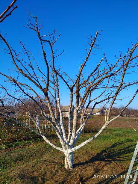 Обрезка деревьев,обрезка сада, кронирование, опрыскивание, валка