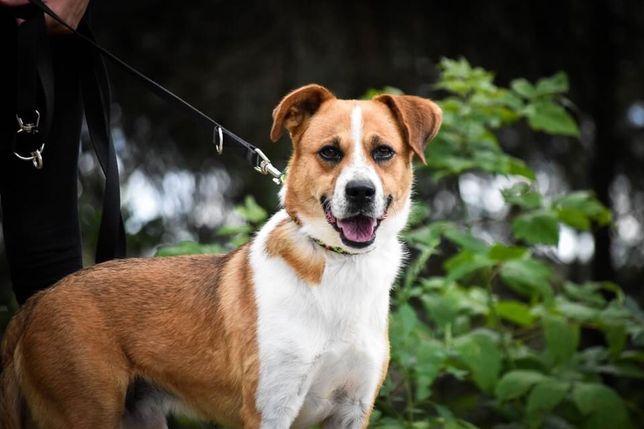 JANIS -szuka domu z psim przyjacielem