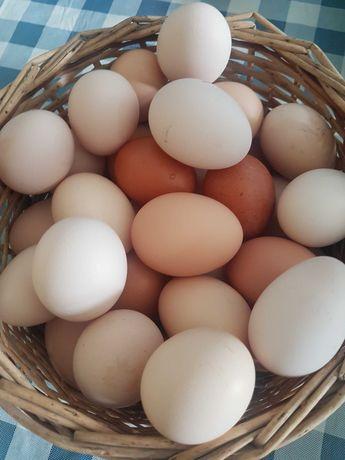 Jajka wiejskie z własnego gospodarstwa