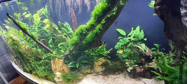 Mchy i rośliny akwariowe