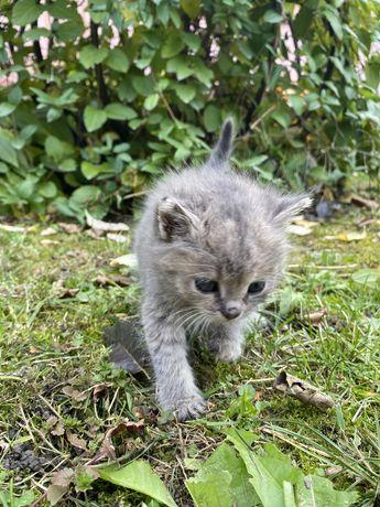 Кошенята шукають дім