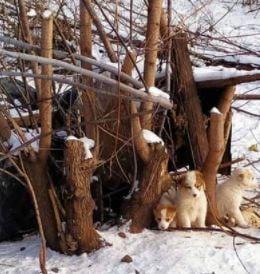 Щенков с мамой выбросили на улице, срочно нужен дом