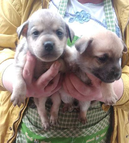Срочно отдам щенков в добрые руки!