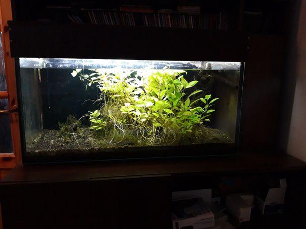 Akwarium 200l kompletne i funkcjonujące: pokrywa, filtry, CO2, życie