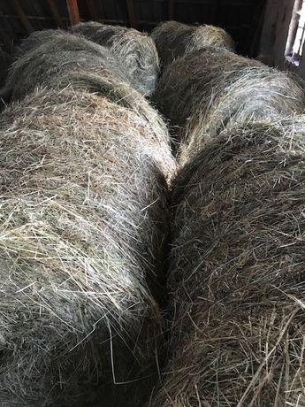 SIANO z łąk ekologicznych Polecam! SEZON 2020