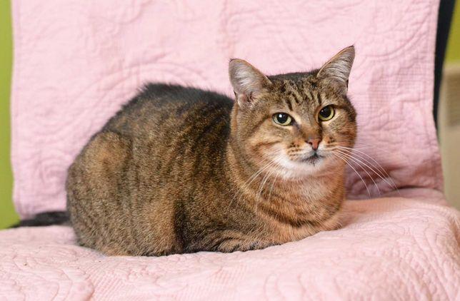 Масяня, 1 рік, диво-кішечка чекає на свою Людину!