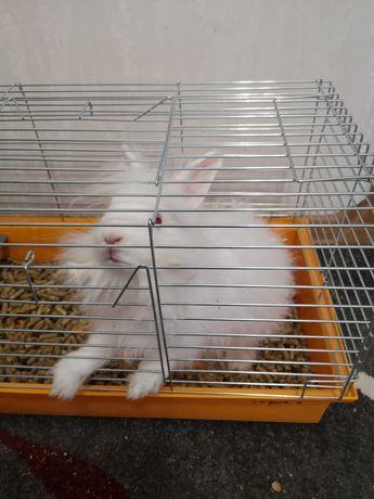 Кролик декоративний терміново віддам