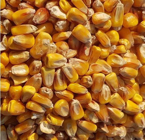 Kukurydza sucha ziarno mielona