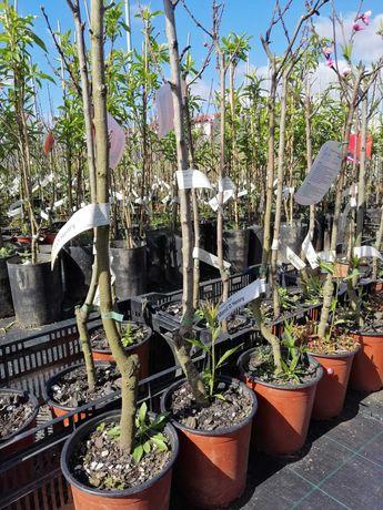 Árvores de fruto e de Jardim, preço sob consulta