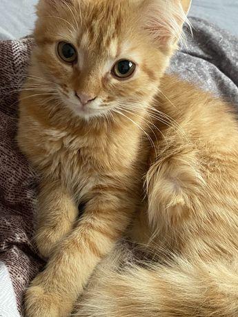 NAGRODA ZA ZNALEZIENIEZaginela ruda kotka prosze o pomoc!
