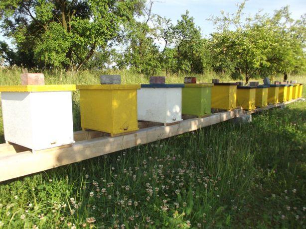 Odkład, Odkłady Pszczele, Pszczoły.