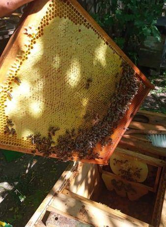 Naturalny Miód Pszczeli taki od pszczoły