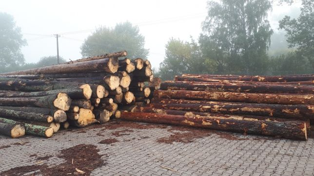 Skup drewna tartacznego iglastego i liściastego