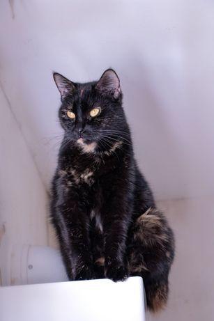 Кошка, котята, котики в добрые руки киев бесплатно