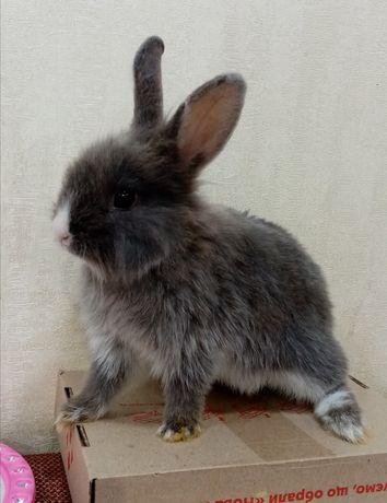 Фотосесии с декоративным кроликом