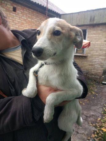 Бесплатно: щенок Эльза 6 мес , привита , стерилизована