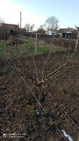 Обрезка деревьев плодовых*винограда*и кустарников