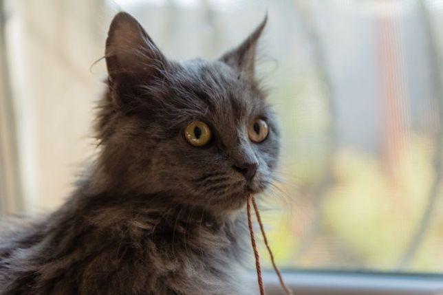 Котик ищет дом и любящую семью