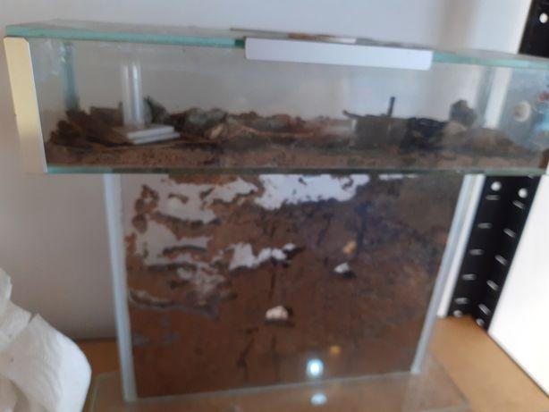 Mrówki Tetramorium guangxiensis z formikarium T