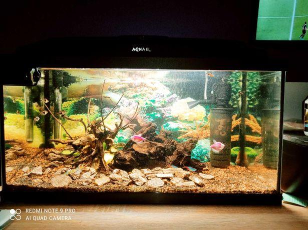 Akwarium 64l z pokrywa