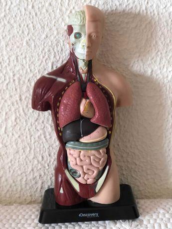 Boneco Corpo Humano/Modelo Anatomia Humana: Discovery(PortesIncluídos)