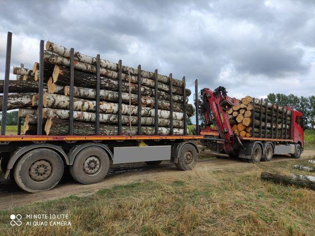 SKUP. WYCINKA Drzewo Brzoza Olcha  Sosna Tartaczna dłużyca kłoda las