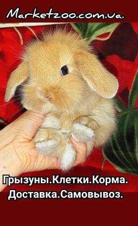 Карликовый супер мини кролик декорат. вислоухий баранчик