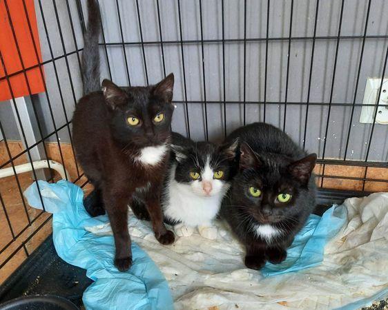 Trykotki - trzy dziewczynki :)