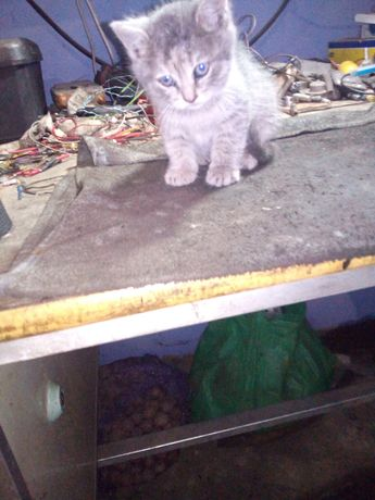 Котята родились 15 марта