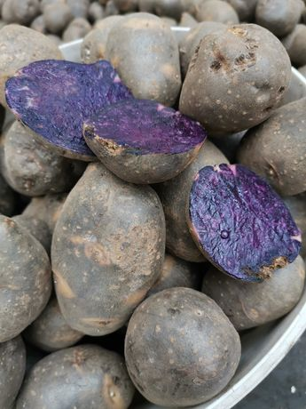 Картошка фиолетовая Солоха без химии