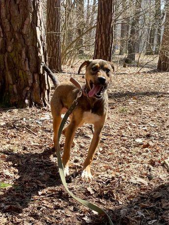 Дельмар - шикарный щенок - подросток ищет дом!