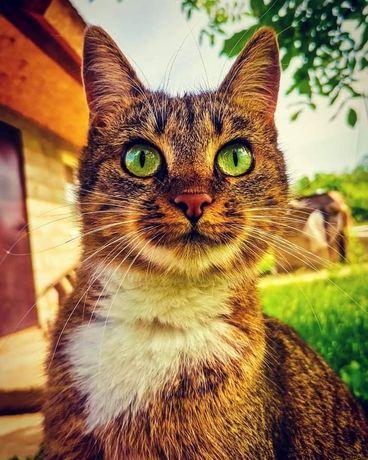 Ищем добрую семью кошечке Мусе!