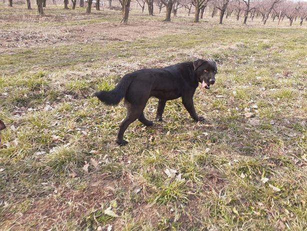 Pies znaleziono w Łącku