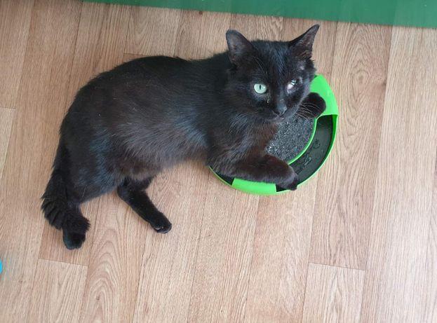 Кот Петя ищет дом
