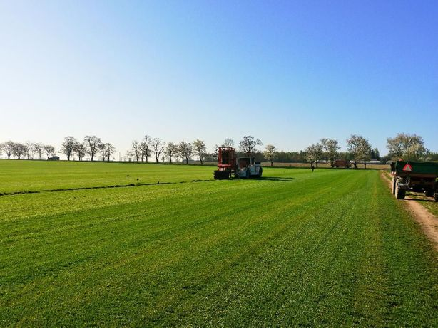 Trawnik, trawa z rolki... Transport i rozładunek HDS