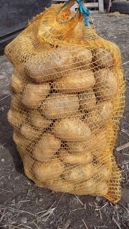 Buraki pastewne buraki opasowe paszowe sadzeniaki denary ziemniaki