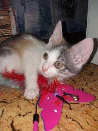 Трехцветный котенок Бася