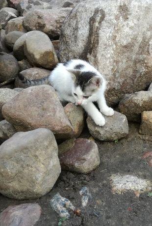 (zarezerwowana) sliczna kotka + mini wyprawka
