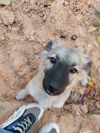 Отдам щенка , мальчик 5 месяцев