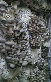 Грибные блоки